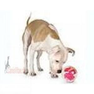 Planet Dog Orbee-Tuff mazee-31