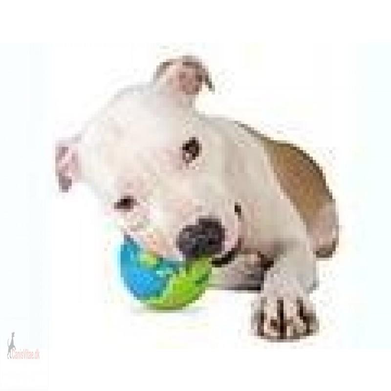 Planet Dog Orbee-Tuff orbee ball, L-01