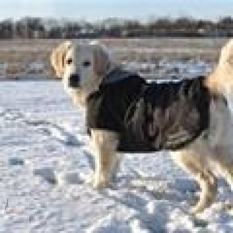 KruuseRehabSoftshellhundedkkenfra-01
