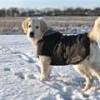 Kruuse Rehab Softshell hundedækken - fra