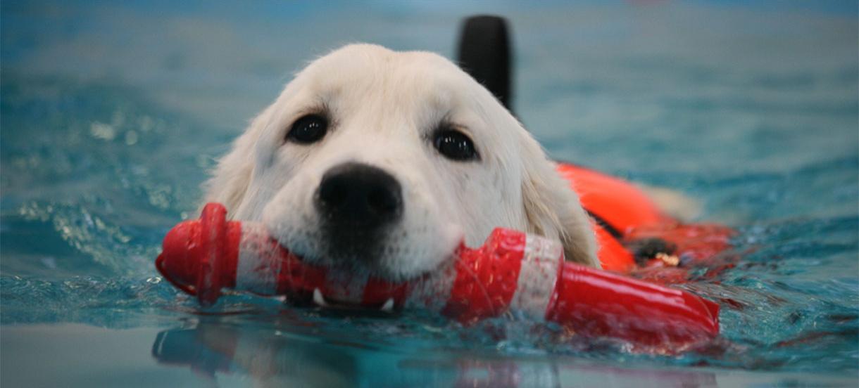 Hundesvømmehal - med ubegrænset hjælp og vejledning.